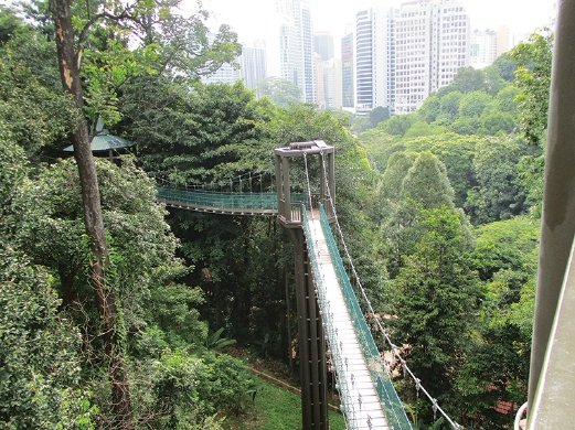 The view of the canopy walk at KL Forest Eco-Park with the forest and buildings surrounding it from one of the canopy towers. & Urban forest | New Straits Times | Malaysia General Business ...