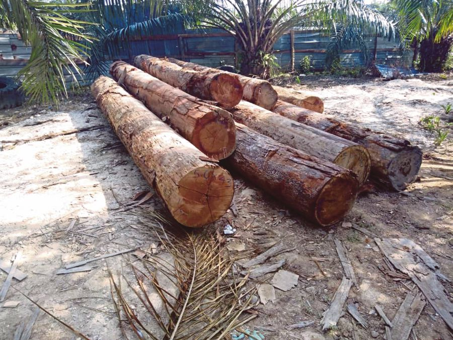 Exclusive] Terengganu loses millions to illegal logging | New