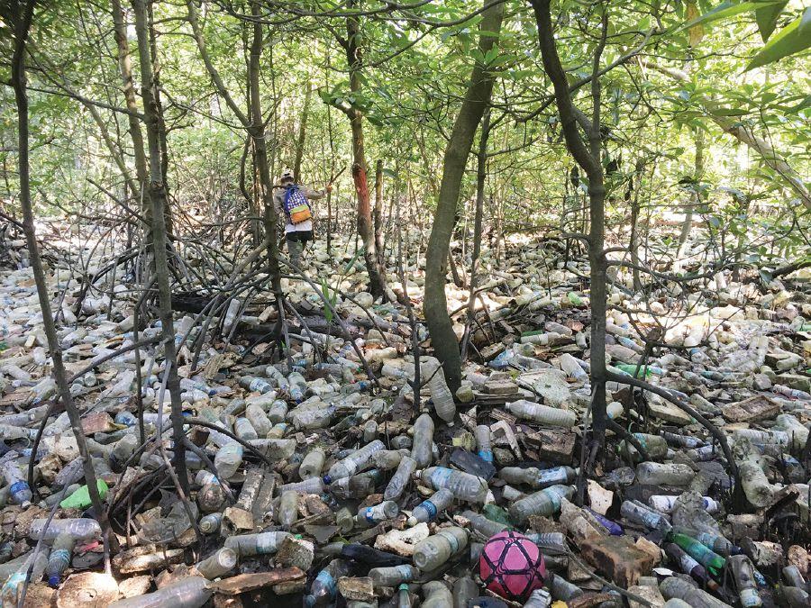 Mangrove Plastic