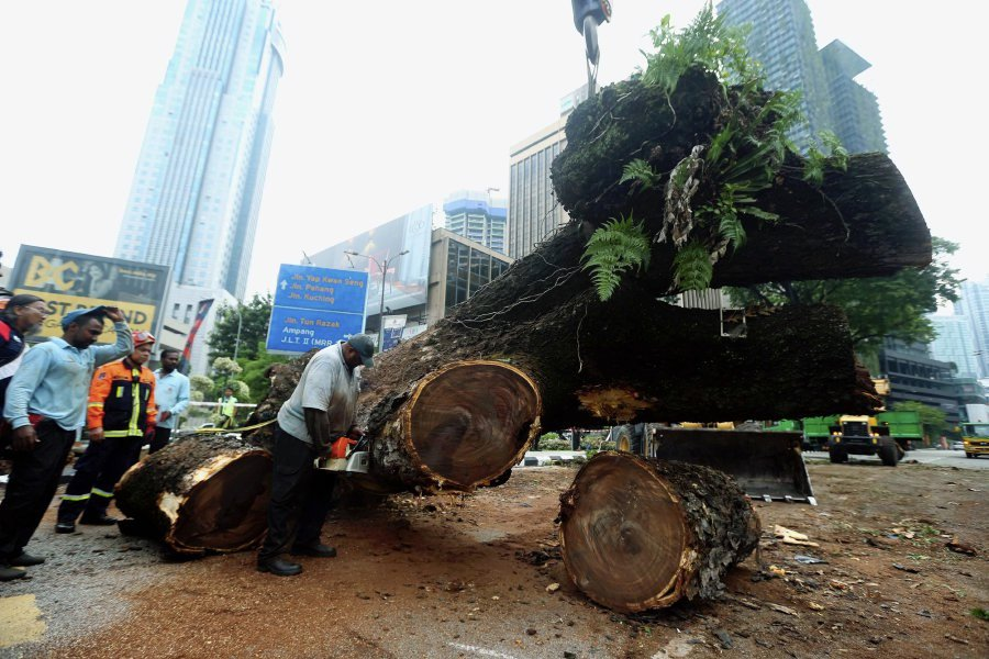 Duo hurt by falling tree near KLCC are newlyweds