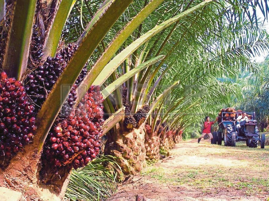 (File pix) Palm oil is consumed daily by billions of people around the world.