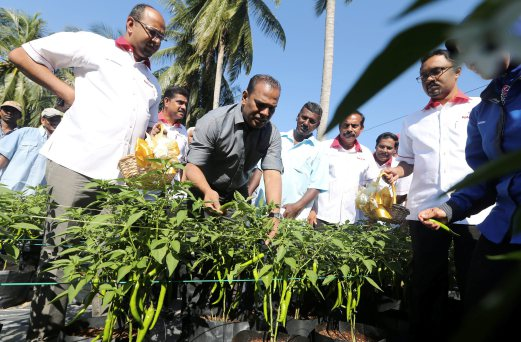 Deputy Youth and Sports Minister Datuk M Saravanan has urged Kumpulan Usaha Niaga (Tekun Nasional) to assist Indian youth in the country through entrepreneurship at the New Affirmative Action Movement (NAAM) First Fertigation Chili Harvest ceremony. Pix by Hazreen Mohamad