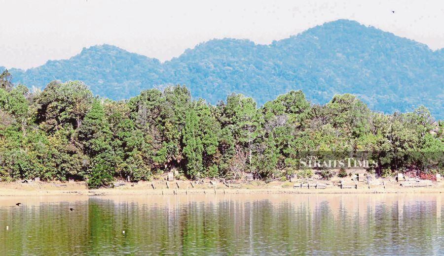 A file photo showing a forest reserve in Kedah. -- NSTP File Pix (For illustration purposes only)