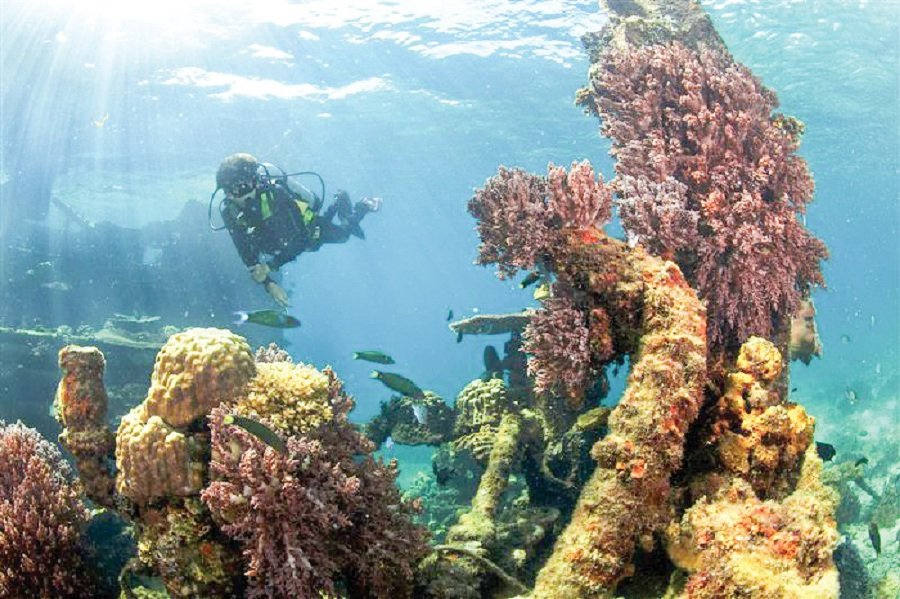 The waters off Redang Island are home to beautiful marine life.