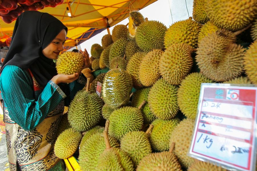 A visitor smells the durian fruit during Sept 2 Federal Agricultural Marketing Authority (FAMA) fruit fiesta at Menara Kuala Lumpur in Kuala Lumpur. Image: HAFIZ SOHAIMI/New Straits Times