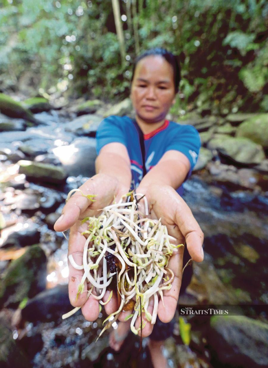 Desa Cinta homestay coordinator Emalia Rabin showing the bean sprouts that are dumped into the river at Kampung Kobuni in Inanam, Kota Kinabalu. PIC BY MALAI ROSMAH TUAH