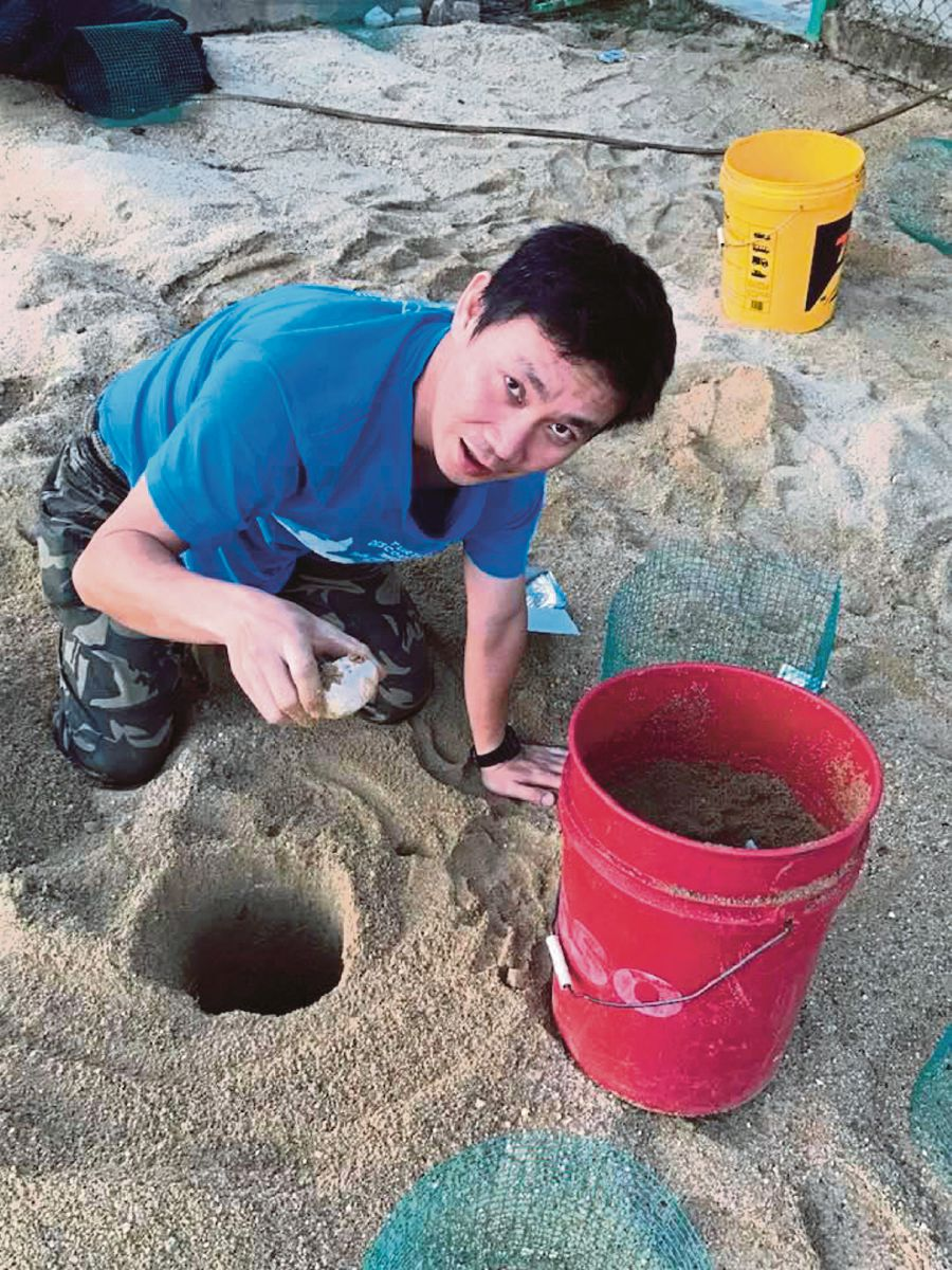 Dylan Wang counting terrapin eggs before transferring it to a hatchery near a sandy spot at a conservation site. PIC COURTESY OF TURTLE CONSERVATION SOCIETY OF MALAYSIA