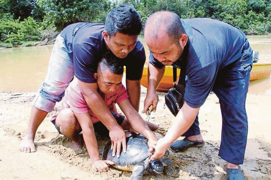 Villagers removing a hook and line to save a terrapin.