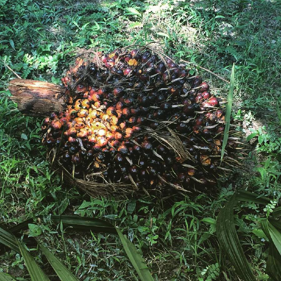 WHO must retract misleading info on palm oil, says Seputeh MP. — Instagram/malaysianpalmoil