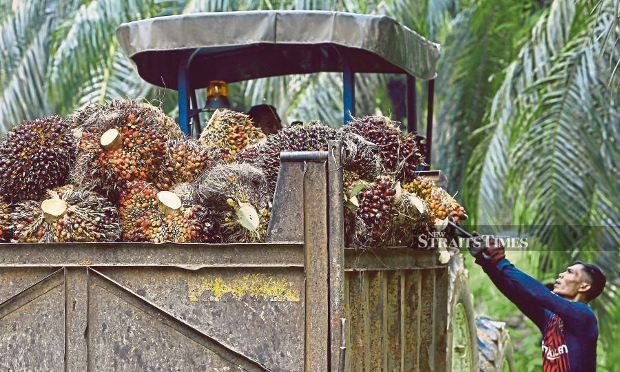 A two-week halt in operations will be damaging to the industry with fresh fruit bunches left to rot and the livelihoods of smallholders affected. NSTP/ADZLAN SIDEK.