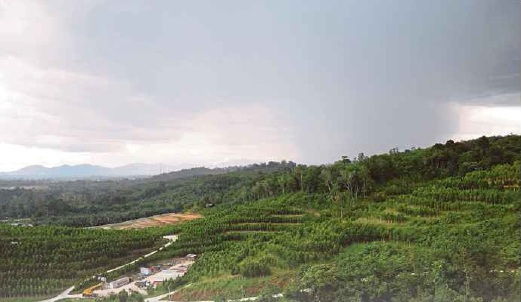 Terraced slopes at Gaharu Tea Valley Gopeng.