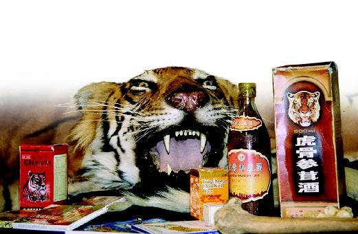 Traditional Chinese Medicine (TCM) is one such form of medicine that uses wildlife products. Pic courtesy of utexas.edu