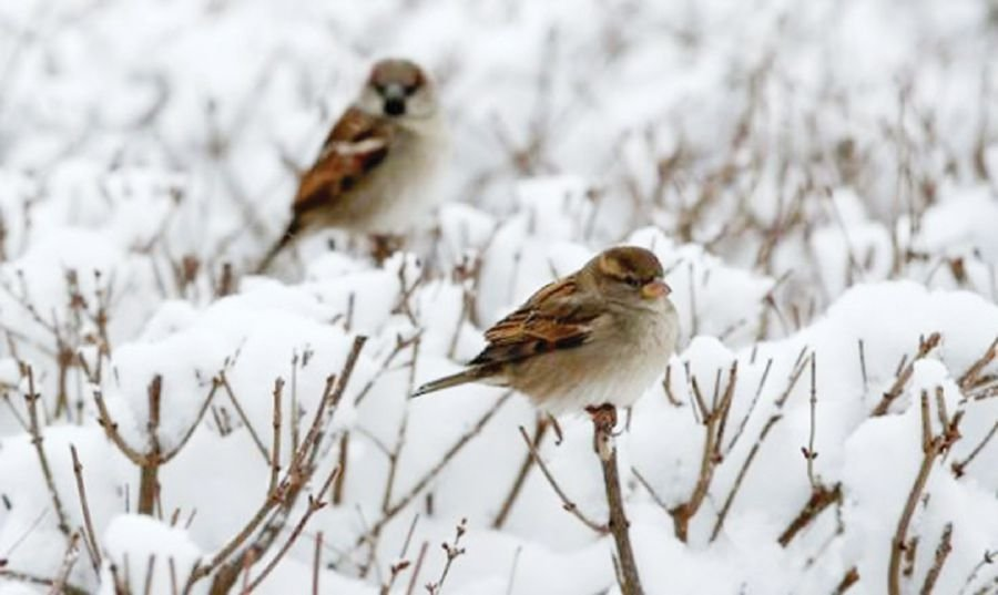 A sparrow is a powerful spirit animal and a symbol of hardwork and diligence. Reuters pic