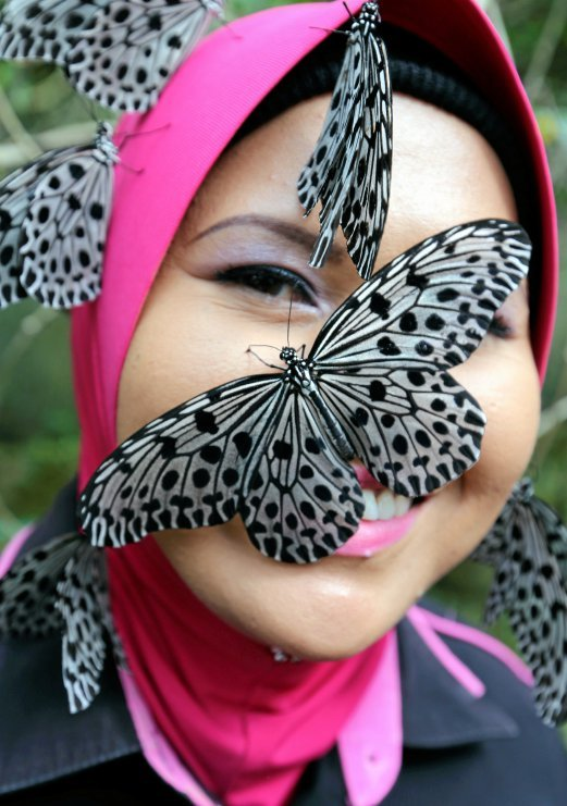 butterflies of the world pdf