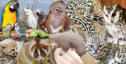 Cruelty abounds in exotic pet trade | New Straits Times ...