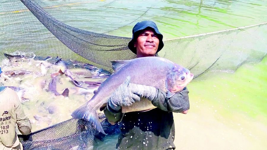 Alien fish running riot in local rivers new straits for Local fishing ponds