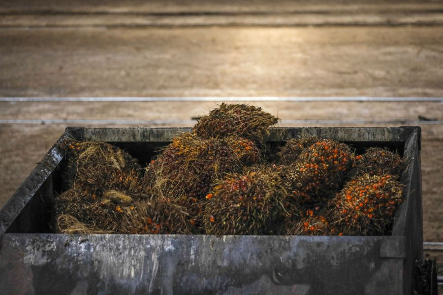 The Malaysian Palm Oil Board says  the health benefits of palm oil and its phyto-nutrients are being explored extensively.  BLOOMBERG PIC