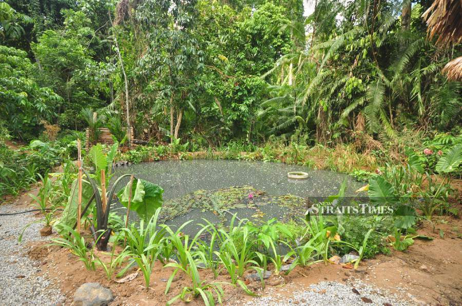 A permaculture garden is designed to mimic the natural growth and inteaction between species.