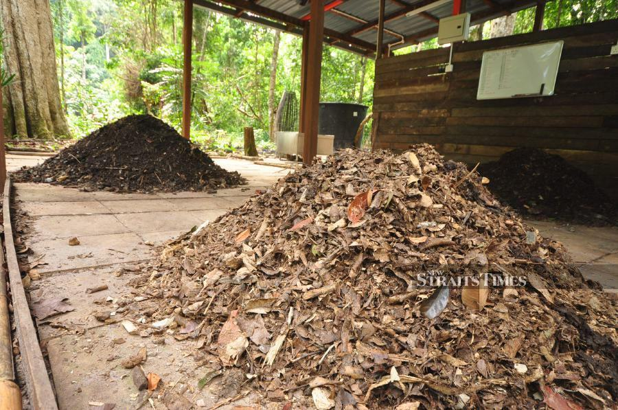 Compost pile.