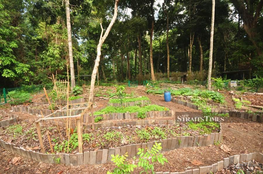 No-dig raised garden beds.