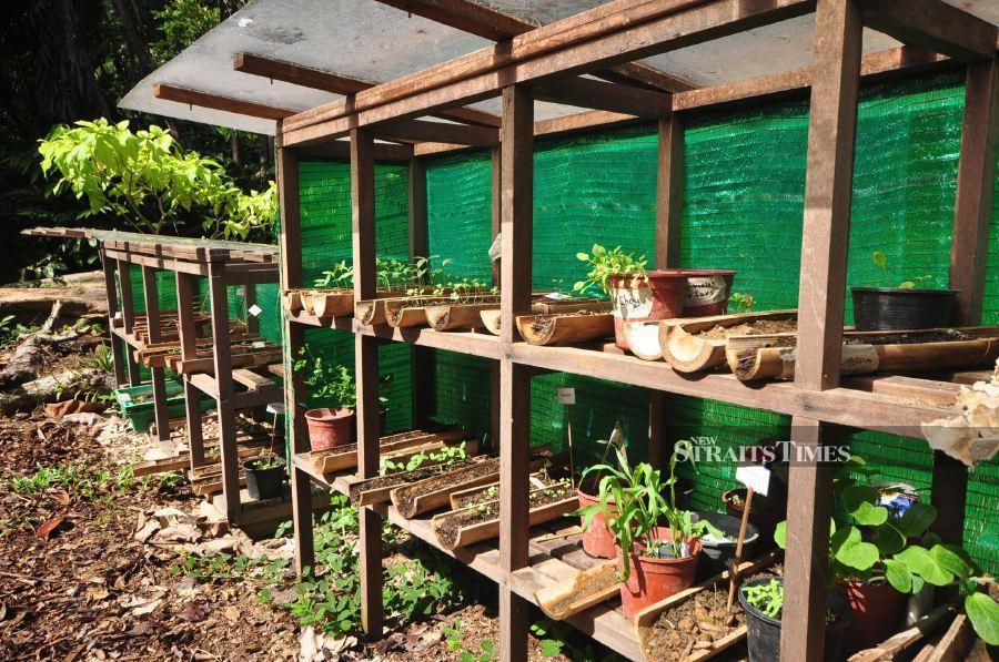 Nursery for the seedlings.