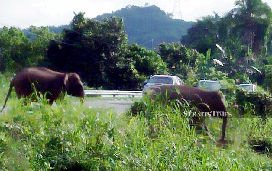 In Malaysia, as elsewhere, the rise in  roadkill incidents  contributes to biodiversity loss, which is  a threat to the wellbeing of humans every bit as dangerous as climate change. -NSTP/File pic