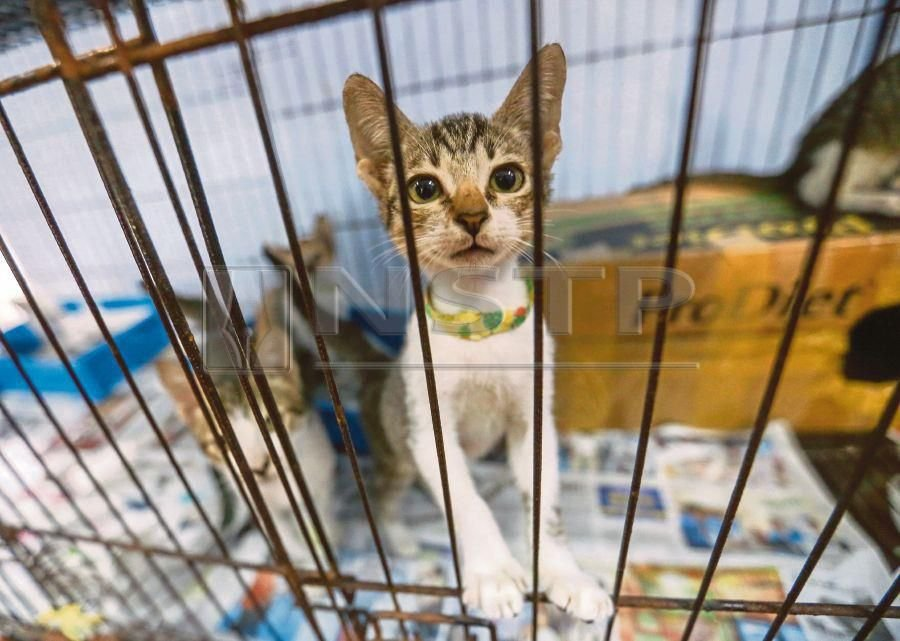 We must not tolerate animal cruelty | New Straits Times