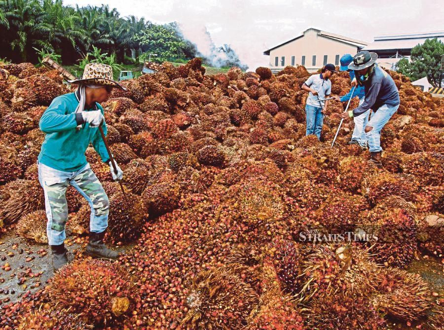 Palm oil exports rose 4 per cent month-on-month (mom) and 2 per cent year-on-year (yoy) to 1.67 million tonnes in October due mainly to stronger demand from India, Pakistan and the US.