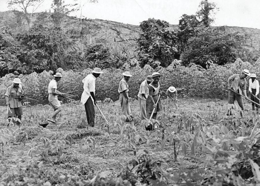 Image result for felda land scheme