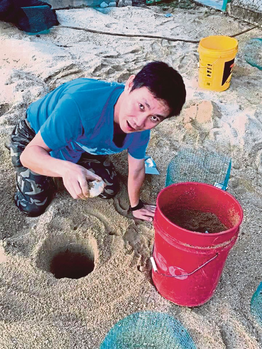 Dylan Wang counting terrapin eggs before transferring them to a hatchery near the conservation site in Kemaman recently. - Pic courtesy of the Turtle Conservation Society of Malaysia