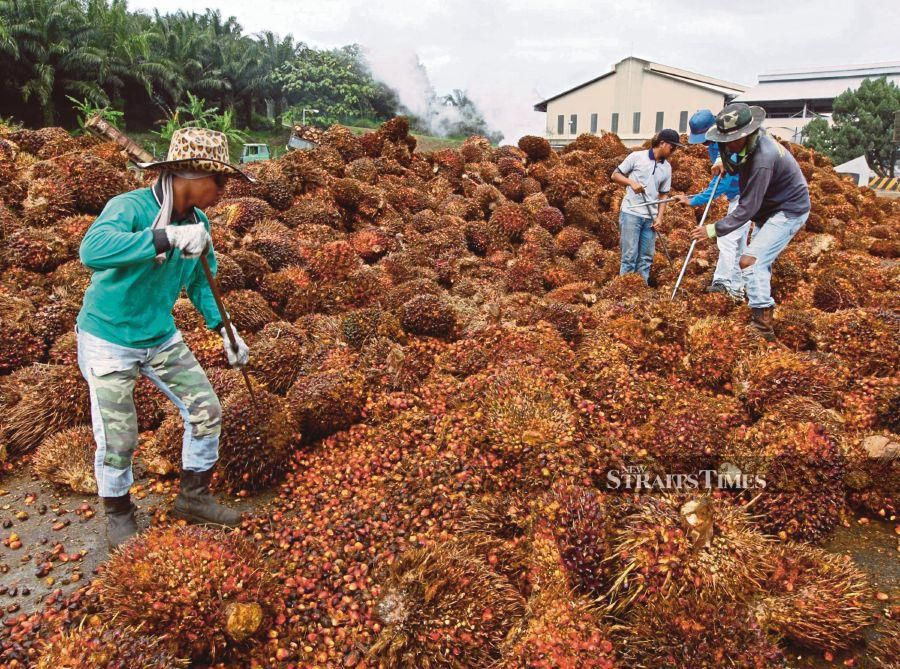 Workers sort bunches of harvested oil palm fruit at the Felda Global Ventures Holdings Bhd. palm oil plant in Besout, Perak. Photographer: Goh Seng Chong/Bloomberg