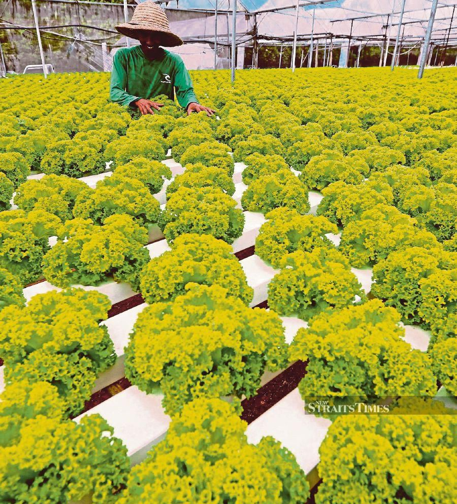 Farming as a career should be made appealing to millennials given that conventional jobs may become scarce because of the Covid-19 pandemic.  FILE PIC