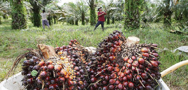 China will import more palm oil products from Malaysia: Chinese