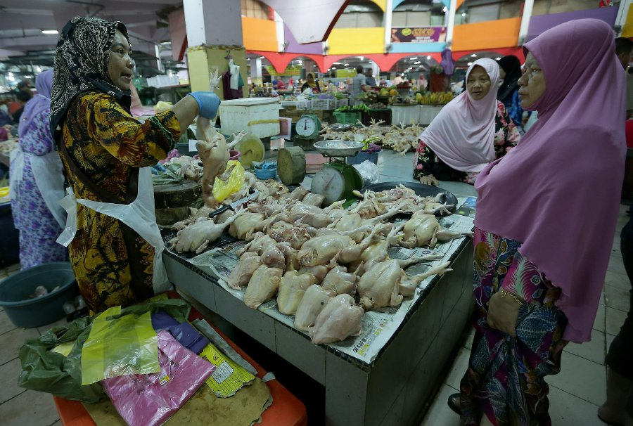 no-new-cases-of-h5n1-in-kelantan-but-precautionary-measures-remain