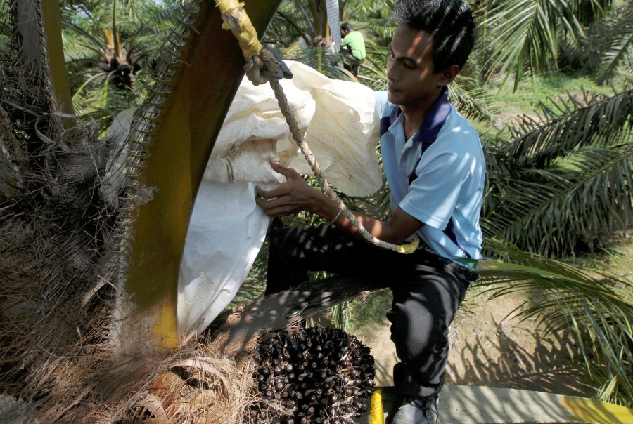 France will not discriminate against oil palm products, says minister