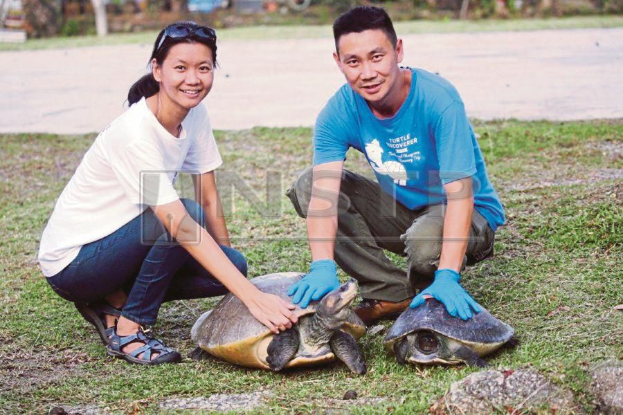 Turtle Conservation Society (TCS) co-founder Dr Chen Pelf Nyok and her husband, Dylan Wang, who is TCS assistant project manager, with some turtles recently. PIC COURTESY OF VERA NIEUWENHUIS/PHOTOGRAPHERS WITHOUT BORDERS