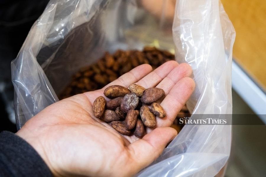 Guan Chong to double cocoa grinding capacity in five years | New