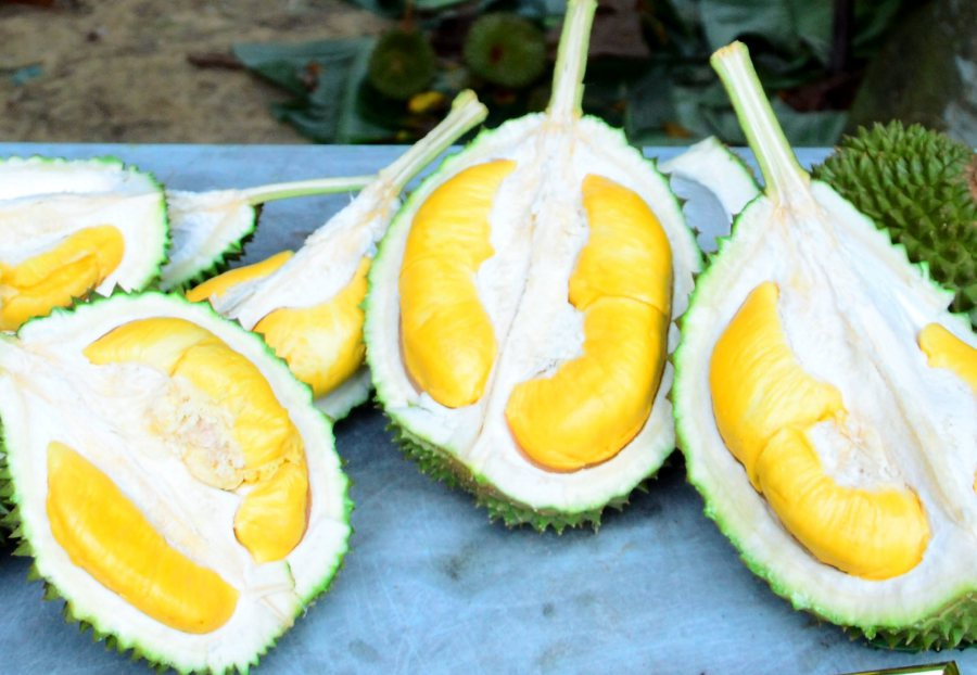 Malaysia to use 'Musang King' to make China world's largest durian
