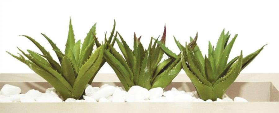 Flourishing Plants New Straits Times Malaysia General Business