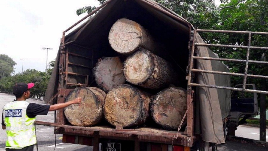 Three Men Caught Red Handed With Logs In Rompin