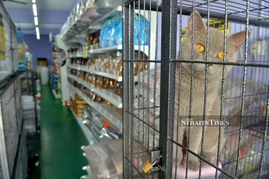In a statement, it called on the public not to be alarmed as pets are not spreaders of Covid-19 infection. -STR/FAIZ ANUAR