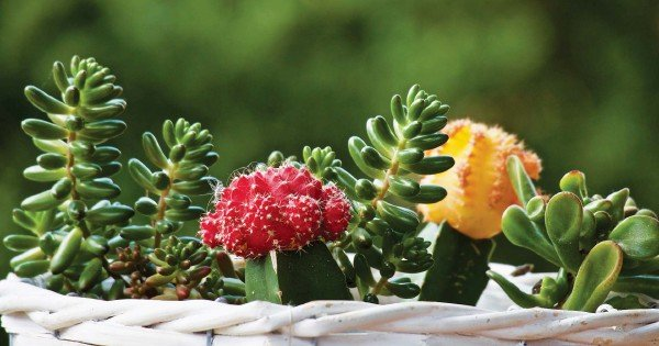 Feng shui: Right place for lovely but thorny plants | New