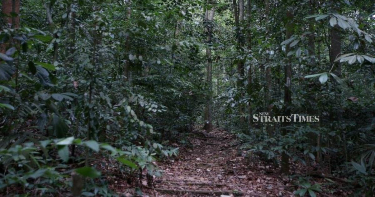 Cambodian forest shrinks to only 47pct in last 40 over years