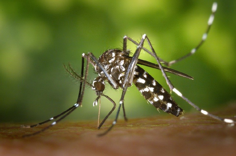 The Health Ministry said in a statement that at least 168 people were examined at the Poipet health centre and preliminary tests showed it was Chikungunya. -File pic