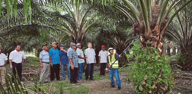 School Syllabus May Soon Include Palm Oil Chapters New