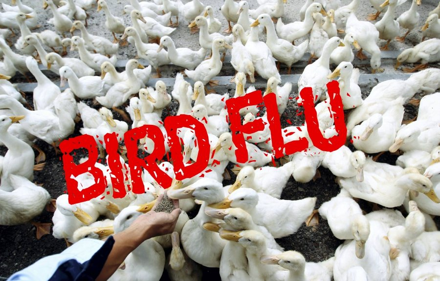 SK to Disinfect All Poultry Farms, Vehicles Following Bird Flu Outbreak