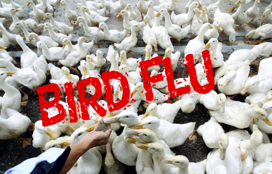 South Korea Introduces Quarantine at Farms Over Bird Flu Case