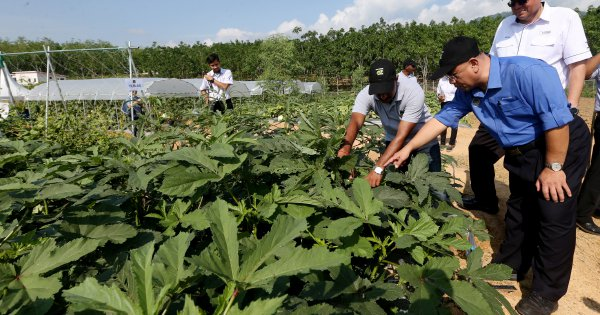 Dutch vegetable-breeding company picks Perak as first R&D