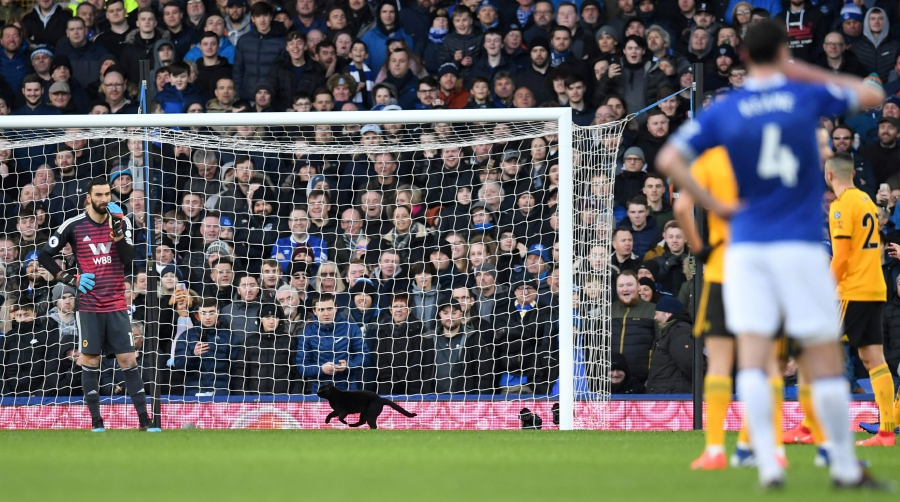 Black cat invades football match, steals the limelight | New