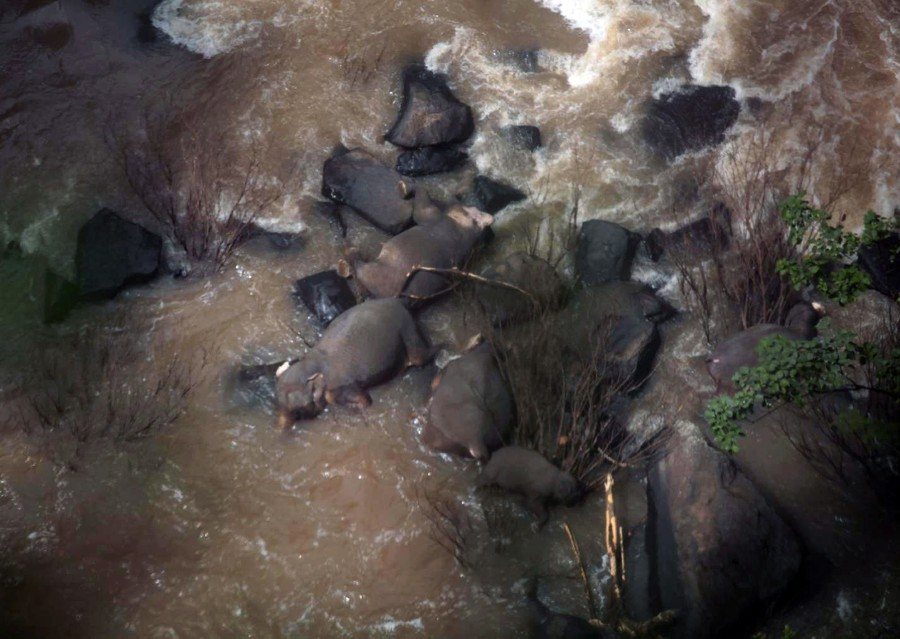A handout photo made available on Oct 5 by the Department of National Parks, Wildlife and Plant Conservation (DNP) shows some of the elephants that died in Haew Narok Waterfall in Khao Yai National Park, Prachin Buri Province, Thailand. - EPA